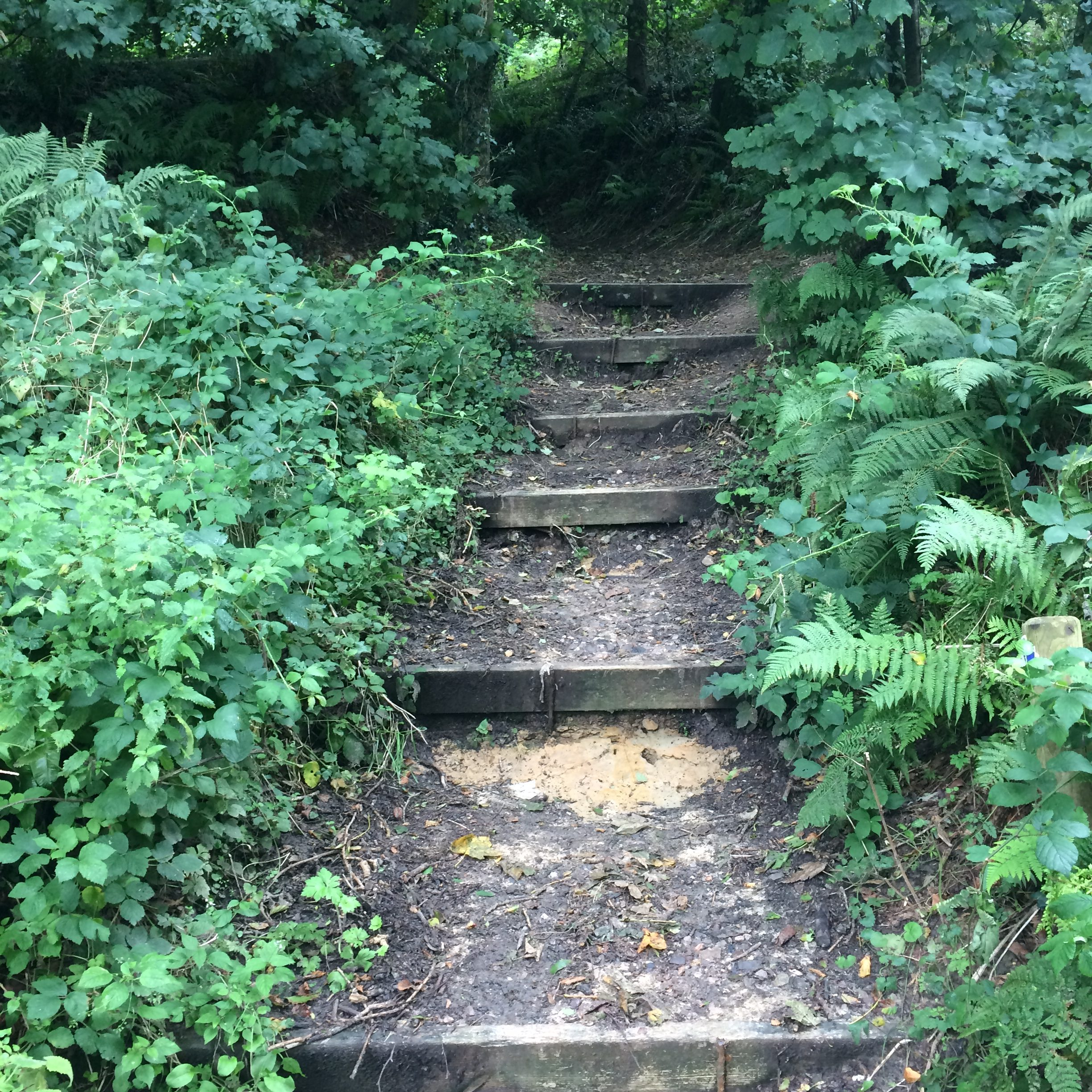 Steps up - Lewesdon Hill