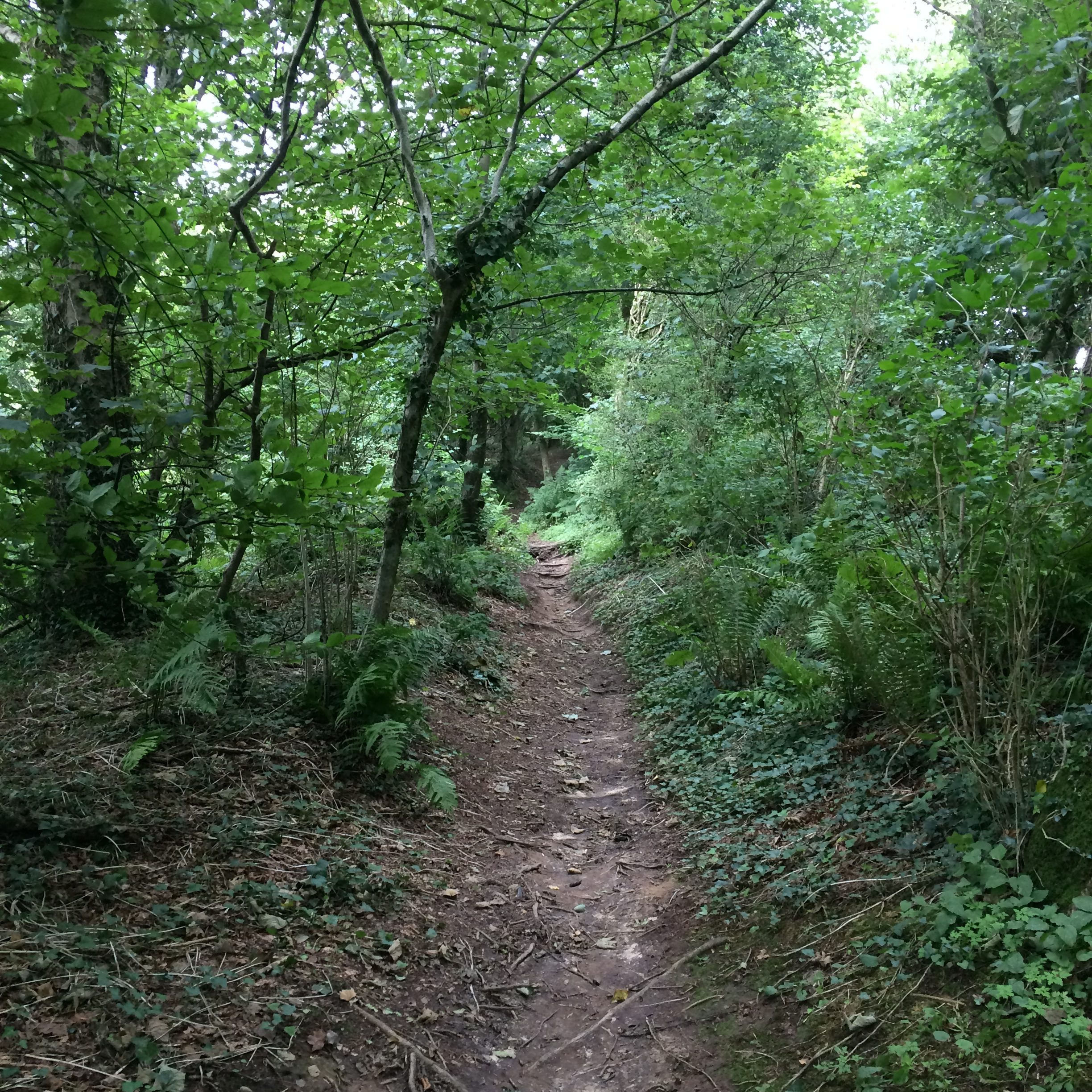 Path up Lewesdon Hill
